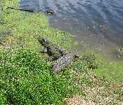 Brazos Bend State Park 032010 2