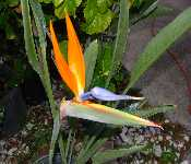 My First Orange Bird Flower 07